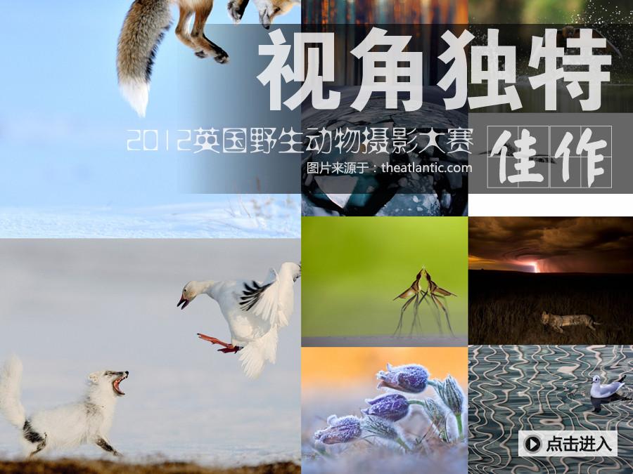 2012英国野生动物摄影大赛获奖作品展