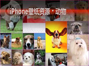 卖萌小狗来敲门 iPhone动物高清壁纸集