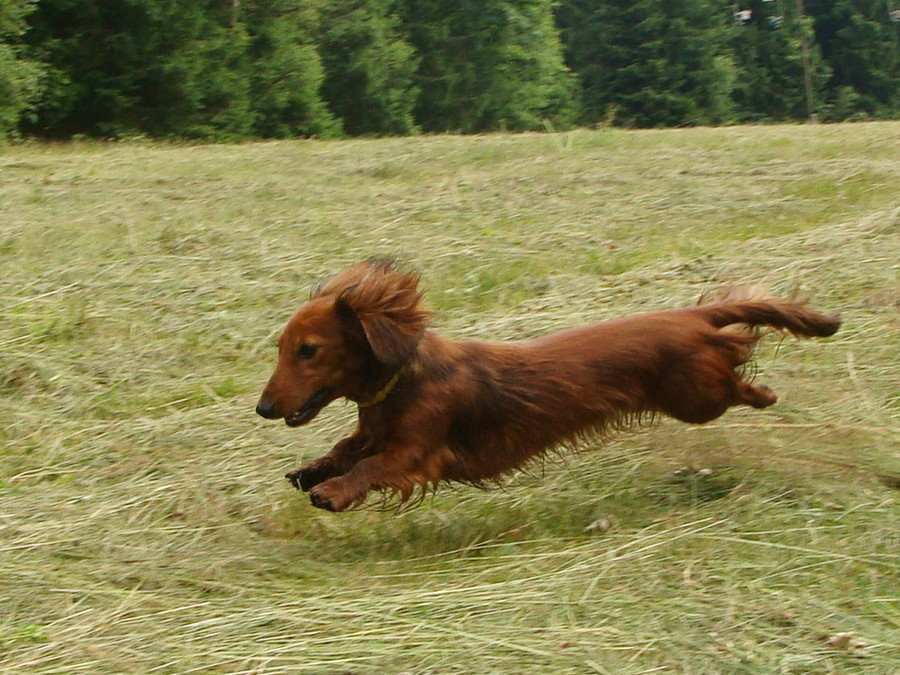 动物运动会 看宠物奔跑中的精彩瞬间