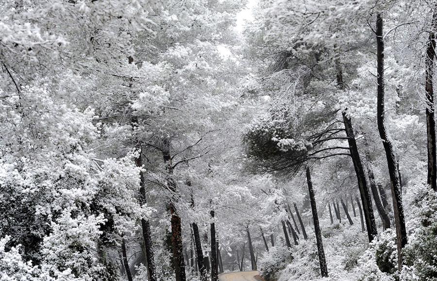 摄影师:stan honda 12/26 彭布罗克的一场春雪中,一群鸟儿在树杈上