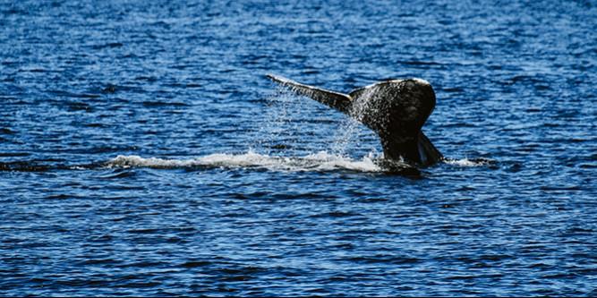 入门也强悍 用佳能EOS 1500D/3000D拍鲸鱼是什么体验