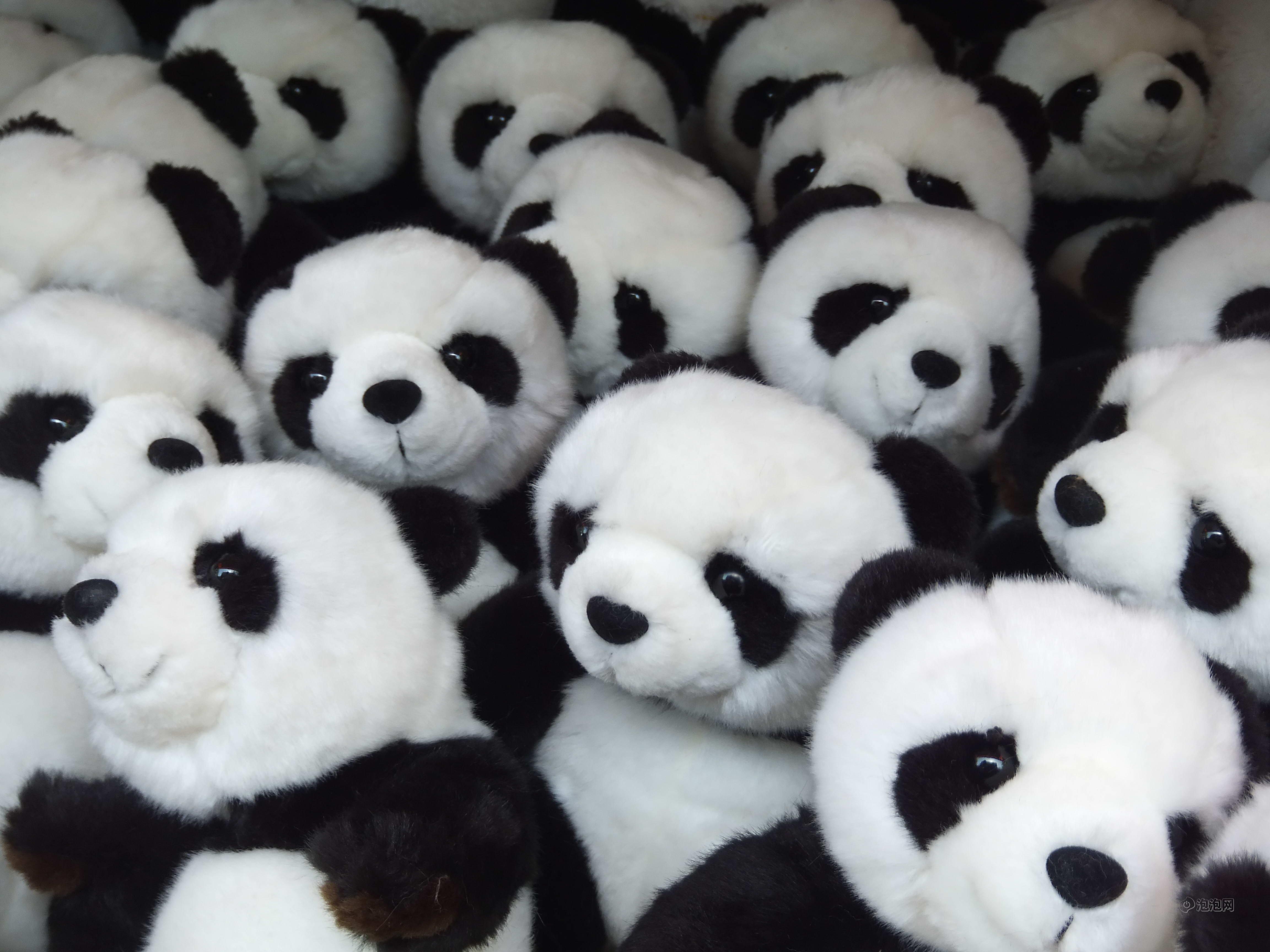 壁纸 大熊猫 动物 4608_3456
