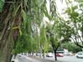 魅族魅蓝Max 64GB 全网通 银色图片