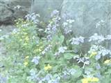 奥林巴斯E-M5 MarkII样张图片3