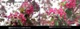 魅族魅蓝Note3 全网通样张图片8