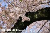 佳能EOS 5D风景样张图片1