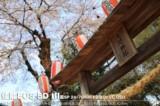佳能EOS 5D风景样张图片3