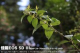 佳能EOS 5D风景样张图片4