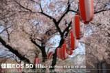 佳能EOS 5D风景样张图片5
