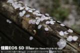 佳能EOS 5D风景样张图片6