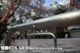 佳能EOS 5D风景样张图片8