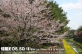佳能EOS 5D风景样张图片9