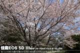 佳能EOS 5D风景样张图片10
