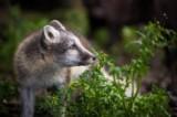 佳能EOS 5D动物样张图片9