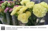 努比亚Z11 标准版评测图片4