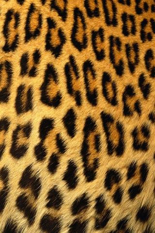 豹纹手机壁纸大全图片大全_豹纹手机壁纸大全图片下载
