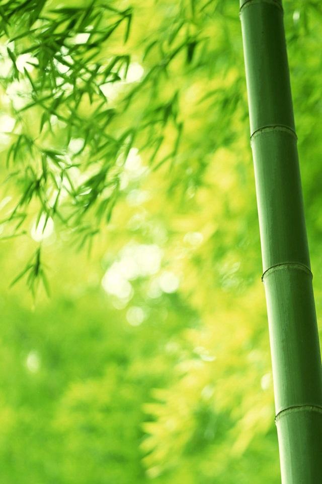 高清竹子桌面背景图 - 高清竹子桌面背景图 - 2013-07-28 .
