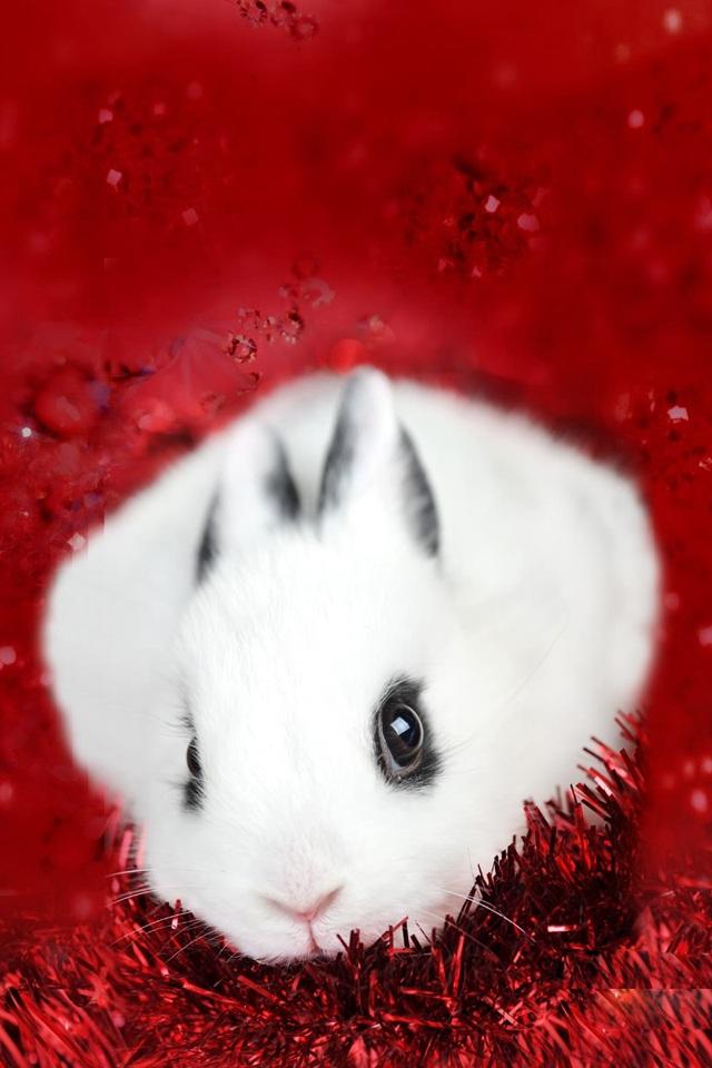蚊子动物狗狗狗壁纸640_960竖版竖屏措施手机的v蚊子兔子图片