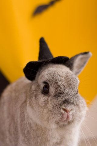 动物手机壁纸 蹦蹦小兔动物手机壁纸