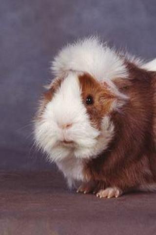 鼠类动物名称及图片
