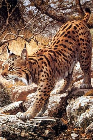 动物手机壁纸 其它动物动物手机壁纸