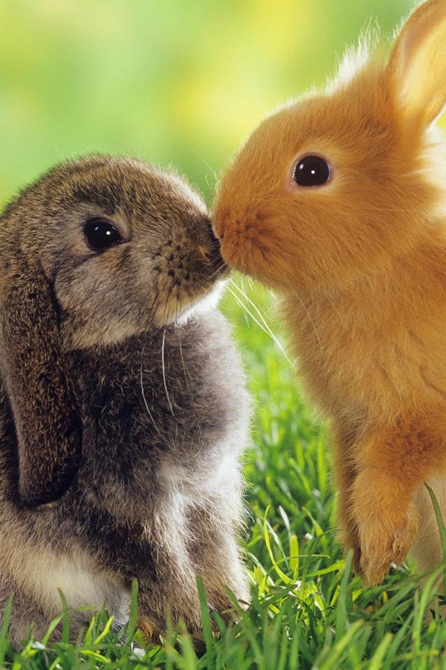 我最喜爱的小动物_别人的和自己的