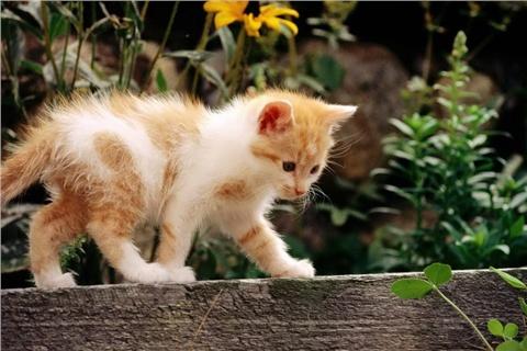 首页 安卓软件 壁纸主题 > 可爱猫咪盒子v6