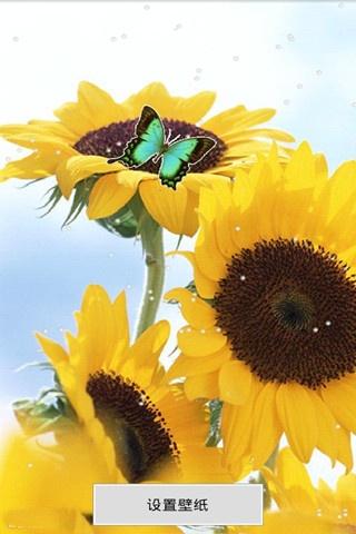 唯美向日葵动态壁纸锁屏